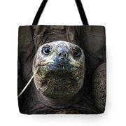 Aldabra Tortoise Tote Bag