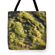 Algae Bloom In A Pond Tote Bag