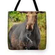 Algonquin Bull Tote Bag