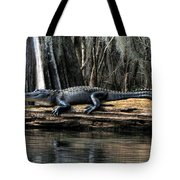 Alligator Sunning Tote Bag