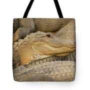 Alligators Tote Bag