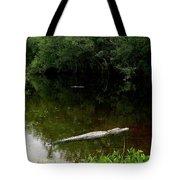 Alligators In The Evergaldes Tote Bag