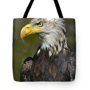Almost There - Bald Eagle Tote Bag
