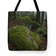 Along The Russell Pond Trail, A Young Tote Bag