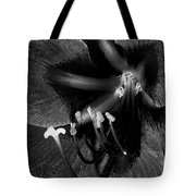 Amaryllis Flower In Black And White Tote Bag