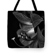 Amaryllis Flower Side View Black And White Tote Bag