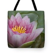 Amazon Water Lily Victoria Amazonica Tote Bag