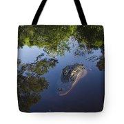 American Alligator In The Okefenokee Swamp Tote Bag