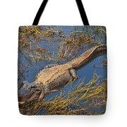 American Alligator Tote Bag