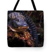 American Alligator On A Cypress Tree Tote Bag