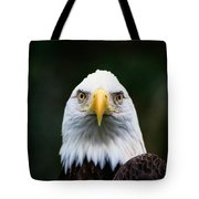 American Bald Eagle Haliaeetus Tote Bag