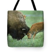 American Bison Cow And Calf Tote Bag