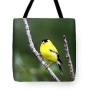 American Goldfinch - Single Male Tote Bag