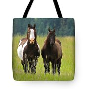 American Paint Stallion And Mare Tote Bag