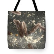 American Toad Tadpoles Tote Bag by Ted Kinsman