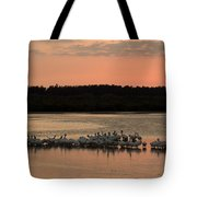 American White Pelicans At Sunset Tote Bag