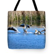 American White Pelicans Tote Bag