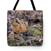 American Woodcock Bird Tote Bag