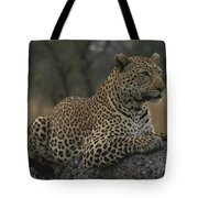 An Alert Leopard Rests On A Fallen Tree Tote Bag