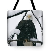 An American Bald Eagle Perched Tote Bag