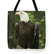 An American Bald Eagle Perches Atop Tote Bag