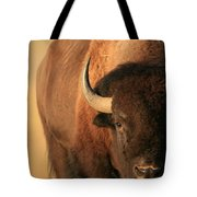 An American Bison In The Early Morning Tote Bag