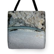 An American Eel Prowls Along The Edge Tote Bag