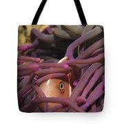 An Anemonefish Peeks Tote Bag
