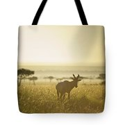 An Antelope Walks In The Grassland At Tote Bag