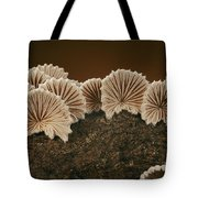 An Array Of Common Split Gill Mushrooms Tote Bag