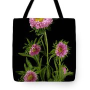 An Aster Flower Aster Ericoides Tote Bag