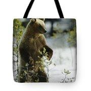 An Brown Bear Ursus Arctos Runs Tote Bag