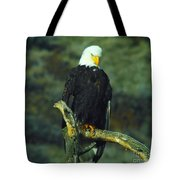 An Eagle Staring Tote Bag
