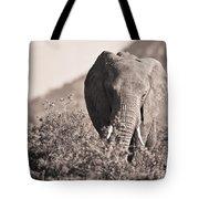 An Elephant Walking In The Bush Samburu Tote Bag