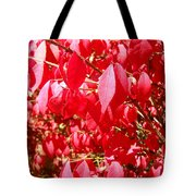 An Ohhh Fall Color Tote Bag
