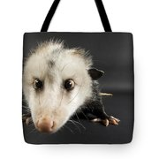 An Opposum Didelphis Virginiana Tote Bag