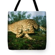 An Unbound, Endangered African Cheetah Tote Bag