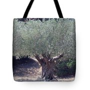 Ancient Old Olive Tree In South France Tote Bag