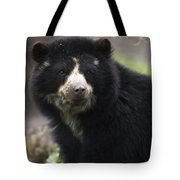 Andean Or Spectacled Bear, Tremarctos Tote Bag
