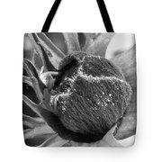 Anemone De Caen Or Poppy Anemone Tote Bag