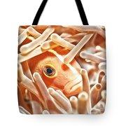 Anemonefish Closeup Tote Bag