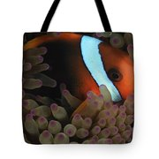 Anemonefish In Purple Tip Anemone Tote Bag