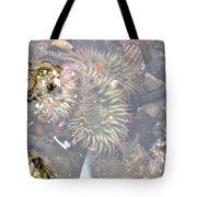 Anemones And Shells Tote Bag