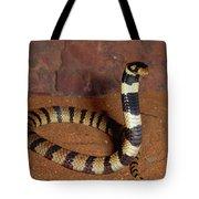 Angolan Coral Snake Defensive Display Tote Bag