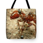 Ant Dorymyrmex Sp Workers Climbing Tote Bag