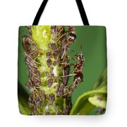 Ant Formicidae Pair Protecting Aphids Tote Bag