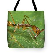 Ant Showing Large Mandibles Guyana Tote Bag