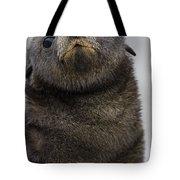 Antarctic Fur Seal Arctocephalus Tote Bag