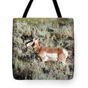 Antelope In Lamar Valley Tote Bag