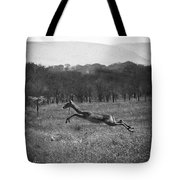 Antelope Jumping In Full Stride Tote Bag